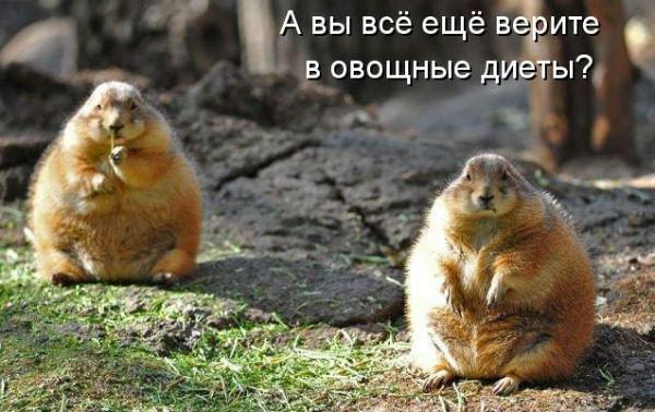 http://se.uploads.ru/3tlFI.jpg