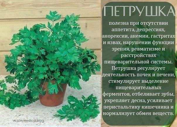 http://se.uploads.ru/62Rah.jpg