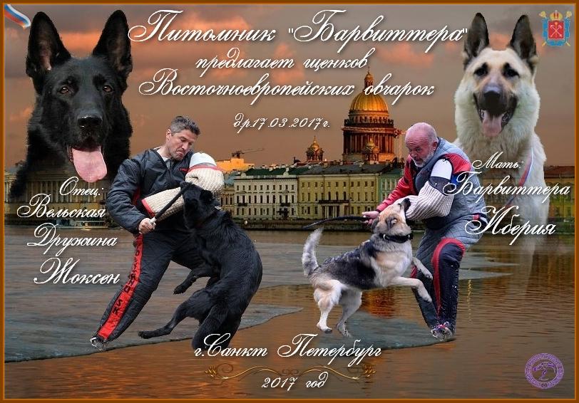 http://se.uploads.ru/FcLoR.jpg