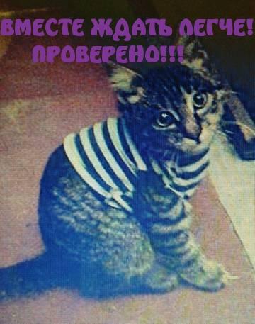 http://se.uploads.ru/NRXmp.jpg