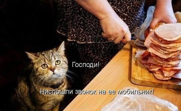http://se.uploads.ru/Nk02s.jpg