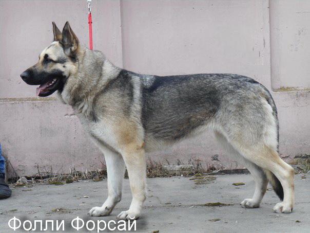 http://se.uploads.ru/OUSij.jpg