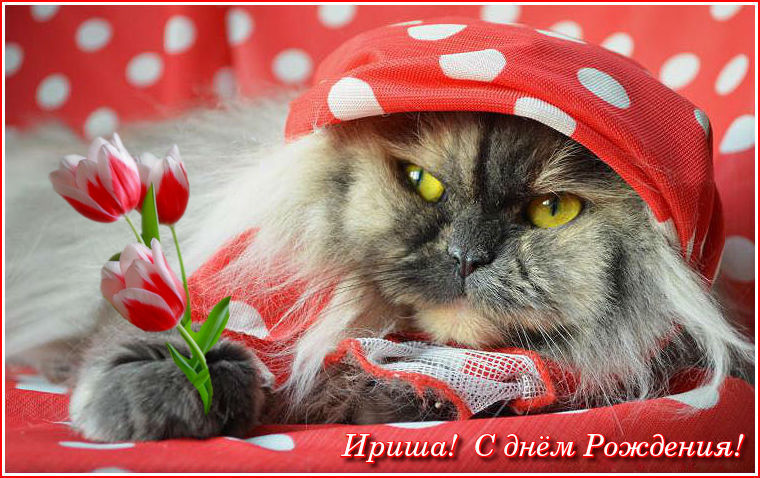 http://se.uploads.ru/OlI7J.jpg