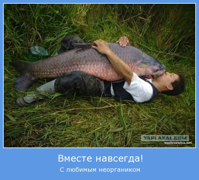 http://se.uploads.ru/WDMQL.jpg
