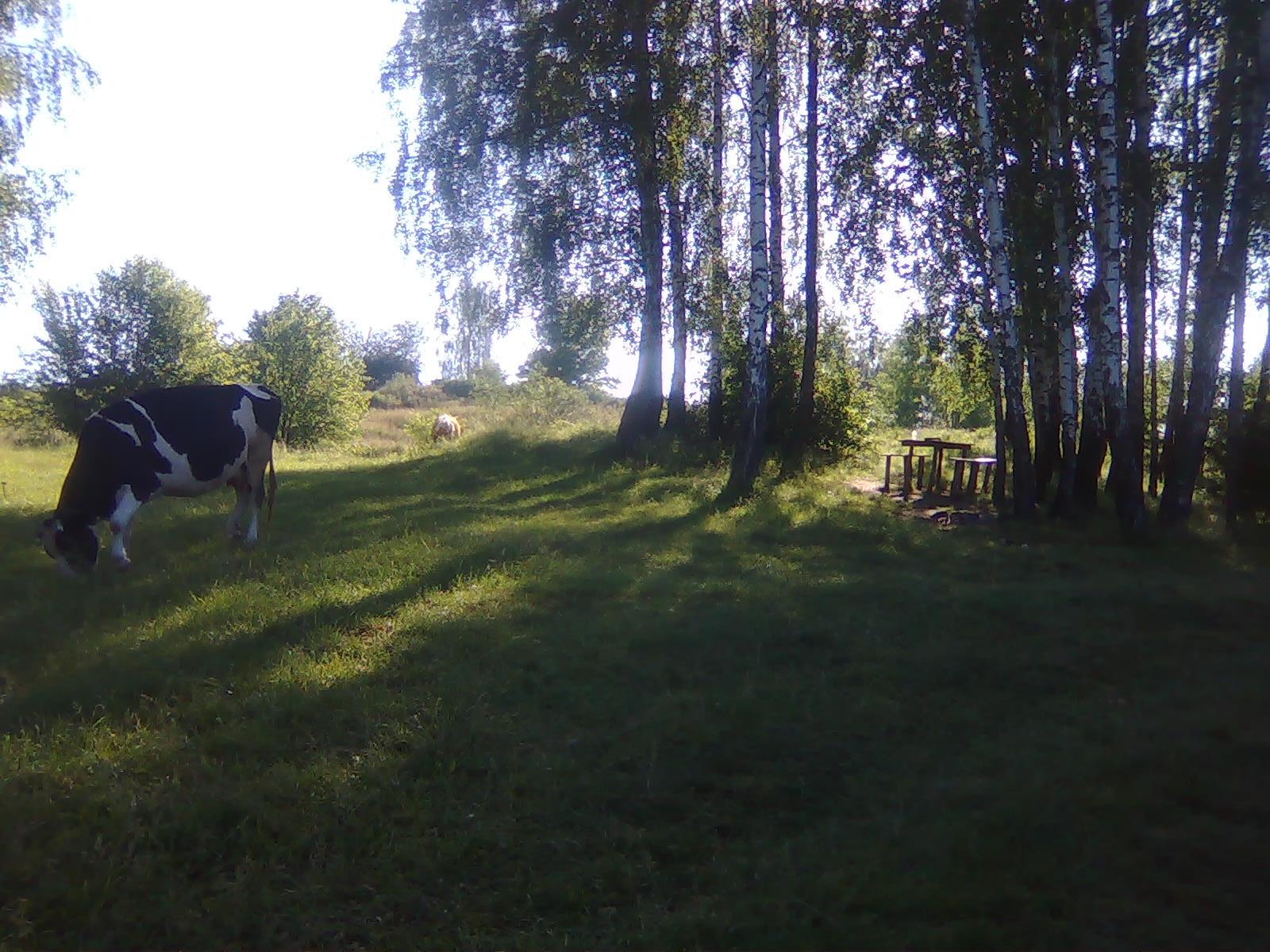 http://se.uploads.ru/YjUgJ.jpg