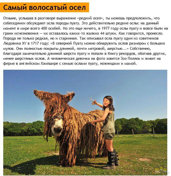 http://se.uploads.ru/ocimW.jpg