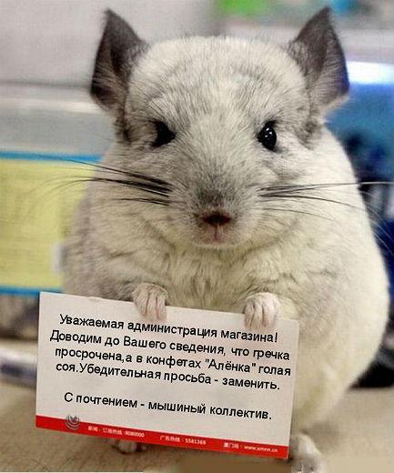 http://se.uploads.ru/rewmh.jpg