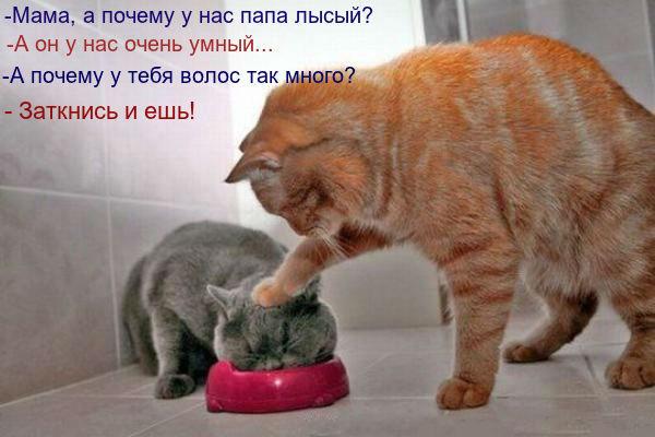 http://se.uploads.ru/svVai.jpg