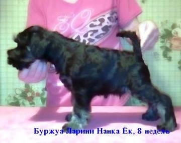 http://se.uploads.ru/t/0pO1c.jpg