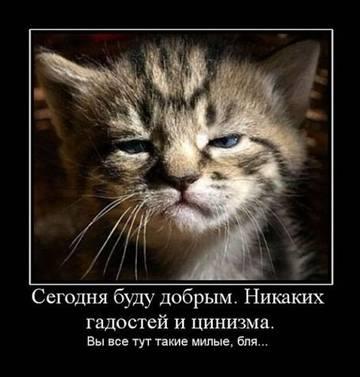 http://se.uploads.ru/t/1WkcO.jpg