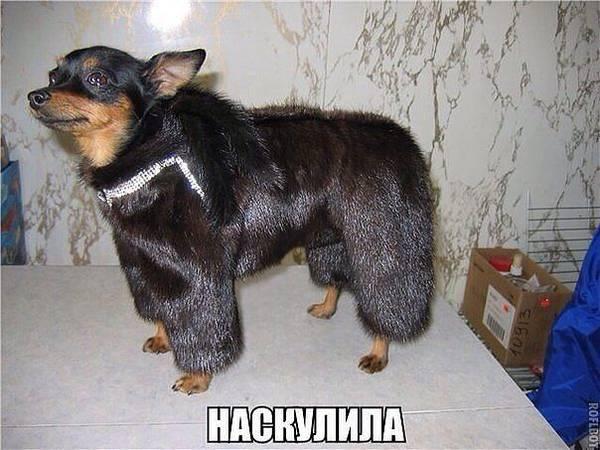 http://se.uploads.ru/t/2M47u.jpg