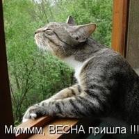 http://se.uploads.ru/t/5dt8C.jpg