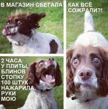 http://se.uploads.ru/t/70ID5.jpg