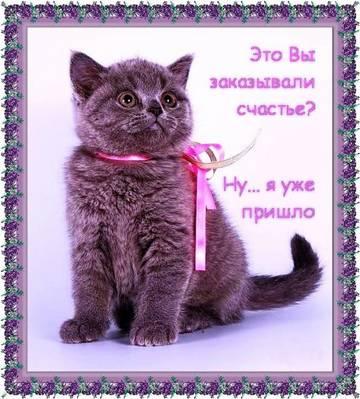 http://se.uploads.ru/t/8Se9g.jpg