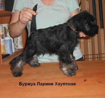 http://se.uploads.ru/t/9tq4E.jpg