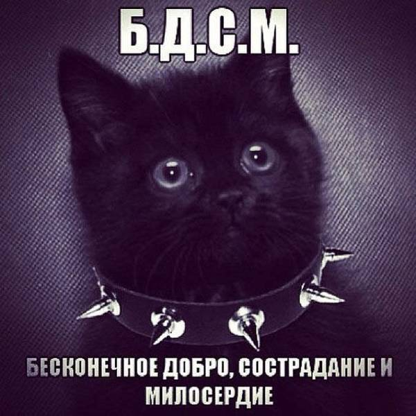 http://se.uploads.ru/t/CI0t8.jpg