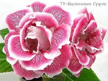 http://se.uploads.ru/t/CUH2J.jpg