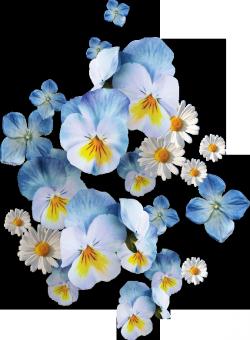 http://se.uploads.ru/t/EtDsI.png