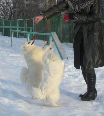 http://se.uploads.ru/t/JpDVn.jpg