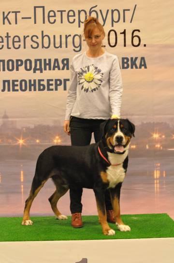 http://se.uploads.ru/t/L5WdB.jpg
