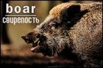 http://se.uploads.ru/t/MBWoY.jpg
