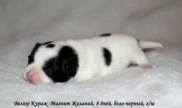 http://se.uploads.ru/t/Mbe83.jpg