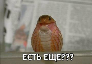 http://se.uploads.ru/t/OAf8s.jpg
