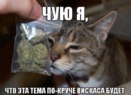 http://se.uploads.ru/t/PFVQU.jpg