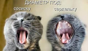 http://se.uploads.ru/t/PNysC.jpg