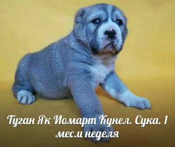 http://se.uploads.ru/t/RSGsJ.jpg