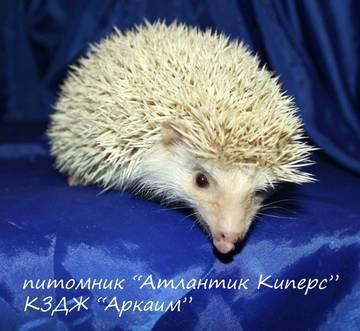 http://se.uploads.ru/t/SOx8f.jpg