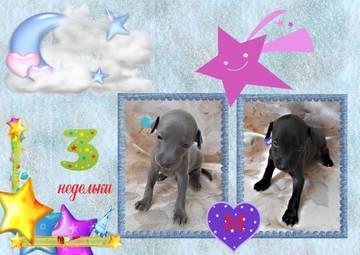 http://se.uploads.ru/t/SjOHe.jpg