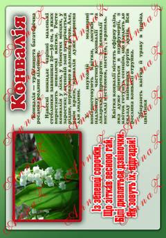 Лікарські рослини нашої країни
