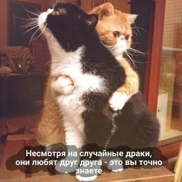 http://se.uploads.ru/t/Z2ClP.jpg