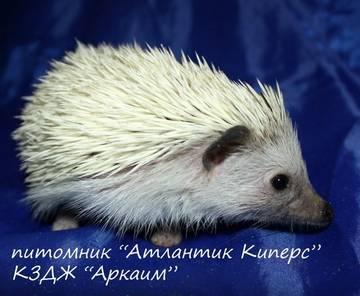 http://se.uploads.ru/t/b5wOc.jpg