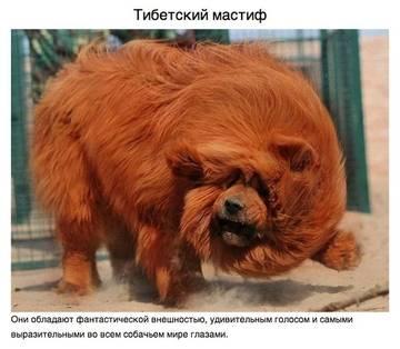 http://se.uploads.ru/t/cgtF2.jpg