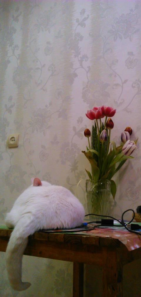 http://se.uploads.ru/t/d9jx7.jpg