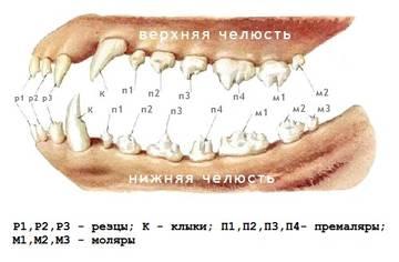 http://se.uploads.ru/t/dZQ2C.jpg
