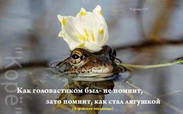 http://se.uploads.ru/t/e0lfY.jpg