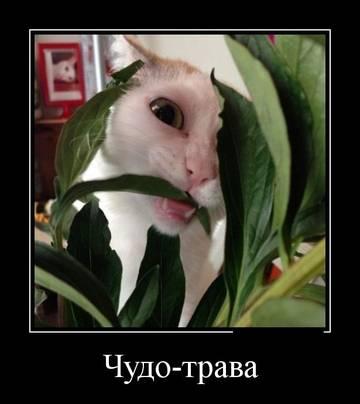 http://se.uploads.ru/t/gRwdm.jpg