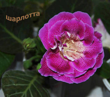 http://se.uploads.ru/t/kFNgq.jpg