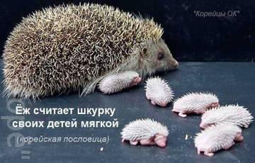 http://se.uploads.ru/t/nHS8c.jpg