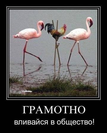 http://se.uploads.ru/t/nKpGf.jpg