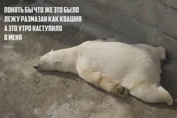 http://se.uploads.ru/t/oxilj.jpg