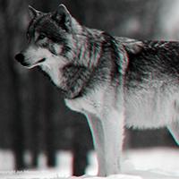 http://se.uploads.ru/t/rLjvx.png