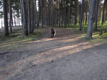 http://se.uploads.ru/t/rVD17.jpg