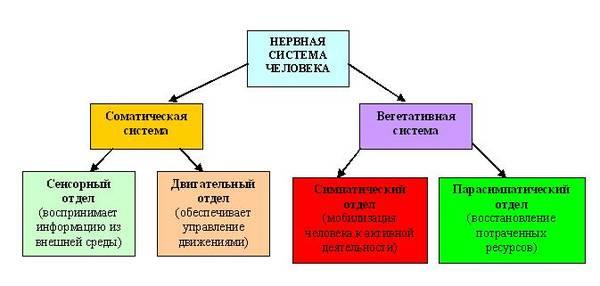 Схема чакр, Энергетическая Конституция