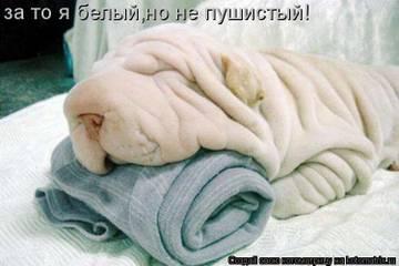http://se.uploads.ru/t/s1b0O.jpg
