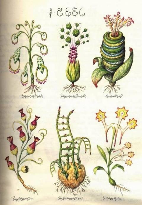Codex Seraphinianus (Кодекс Серафини)