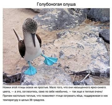 http://se.uploads.ru/t/uXnVF.jpg